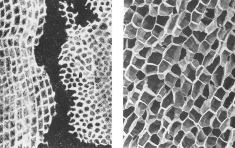 Biologija 7 04. stanica s jezgrom stanice pluta pod svjetlosnim